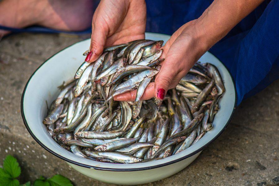 Тюлечка соленая. Одесская гастрономическая традиция. Кулинарный блог Марии Каленской.